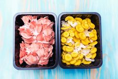 Yellow and pink pleurotus in black plastic boxes. On a blue background royalty free stock photo