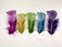 Yellow, pink, purple, green and blue feathers on a white background. Royalty Free Stock Images