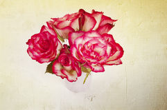 Yellow and pink roses Royalty Free Stock Photos