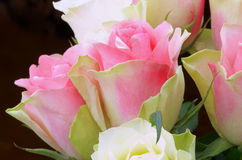 Yellow Pink Roses Royalty Free Stock Images