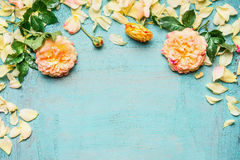 Yellow pink roses with leaves and petals on light blue background, top view Royalty Free Stock Photos