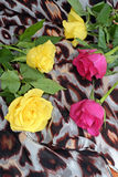 Yellow and pink roses on a scarf with leopard pattern. Decoration, flowers Royalty Free Stock Photography