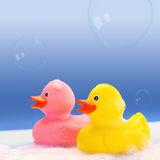 Yellow and pink rubber ducks Stock Photography