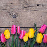 Yellow and pink spring tulips on vintage wooden background. Stock Images