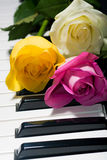 Yellow, pink, tea roses on black and white piano Royalty Free Stock Image