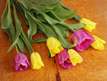 Yellow and pink tulips Royalty Free Stock Image