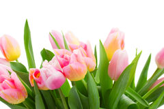 Yellow and pink tulips border Stock Image