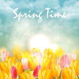 Yellow and pink tulips and sunlight. On sky. Spring flower background Royalty Free Stock Photography