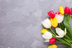 Yellow, pink  and white tulips flowers on grey textured concrete Stock Photos