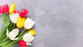 Yellow, pink  and white tulips flowers on grey textured concrete Royalty Free Stock Images