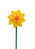 Yellow pinwheel Royalty Free Stock Images