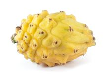 Yellow Pitaya (Hylocereus megalanthus) Stock Photo