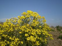 Yellow, Plant, Flower, Flora royalty free stock images