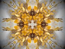 Yellow plant in snow Mandala. Plant with smooth yellow leaves covered in white snow. Abstract Mandala. Cross shape in the middle Stock Photography