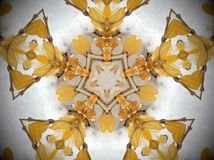 Yellow plant in snow Mandala. Plant with smooth yellow leaves covered in white snow. Abstract Mandala. Pentagon shape in the middle stock photo