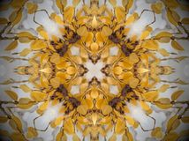 Yellow plant in snow Mandala. Plant with smooth yellow leaves covered in white snow. Abstract Mandala. X shape in the middle stock image
