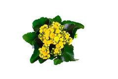Yellow plant on white background stock image