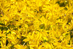 Yellow plants as background Royalty Free Stock Photos