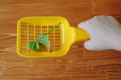 Yellow plastic scoop for cat litter cleaning whith the anthurium flower - nice scent and no smell concept. Stock Photos