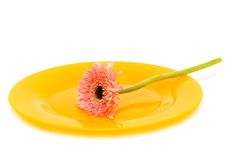 Yellow plate with flower isolated Stock Image