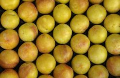 Yellow plum Royalty Free Stock Photo