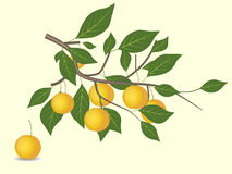 Yellow plum branch Stock Photography