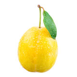 Yellow plum with drops on a white background. Royalty Free Stock Image