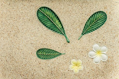 Yellow plumeria flower on stone wall Royalty Free Stock Images
