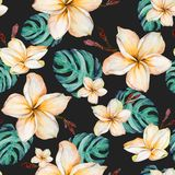 Yellow plumeria flowers and emerald green monstera leaves in seamless tropical pattern. Black background, vivid colors. Watercolor painting. Hand painted royalty free illustration