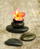 Yellow plumeria and stones Royalty Free Stock Images