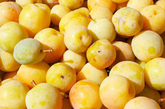 Yellow plums. Big heap of fresh yellow plums with grafts Stock Photos