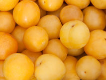 Yellow plums stock images