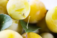 Yellow plums close up. Sweet ripe fruits. Yellow plums close up. Sweet ripe fruits royalty free stock photography