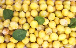 Yellow plums close up. Sweet ripe fruits. Yellow plums close up. Sweet ripe and overripe fruits stock photography
