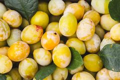 Yellow plums with green leaves. Fresh ripe fruits. Close up royalty free stock photography