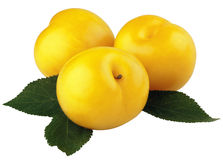 Yellow plums with leaves Royalty Free Stock Images