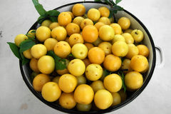 Yellow plums. Summer harvest with fresh yellow plum Royalty Free Stock Photo