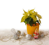 Yellow Poinsettia   on the eve of winter holiday (products of ma Royalty Free Stock Photo