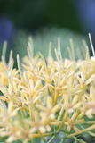 Yellow pollen of flower. Stock Images