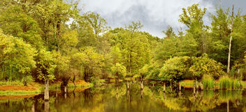 Yellow Pond. Remote pond hidden in the backwoods of Texas during the spring royalty free stock photography