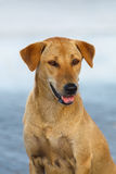 Yellow pooch dog posing on street blur background Stock Photography