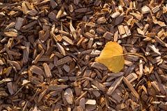 Yellow poplar leaf on wood chip mulch Stock Photo