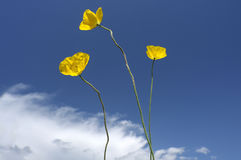 Yellow poppy, under the blue sky Stock Photo