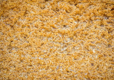 Yellow porous texture of  natural shell stone wall Royalty Free Stock Photo