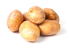 Yellow potato group Stock Image