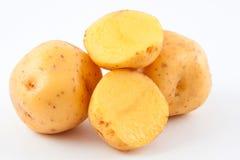 Yellow potato Solanum phureja. Isolated in white background stock photography