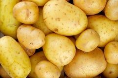 Yellow Potatoes Background Royalty Free Stock Photos