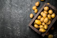 Yellow potatoes in the box royalty free stock photography