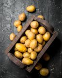 Yellow potatoes in the box royalty free stock image