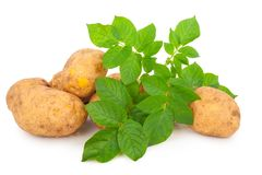 Yellow Potatoes With Leaves Royalty Free Stock Photos